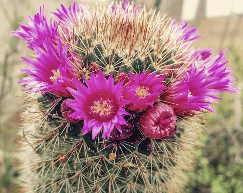 Cactus en Finca La Viña